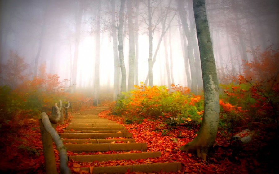 Path-through-foggy-forest-during-fall
